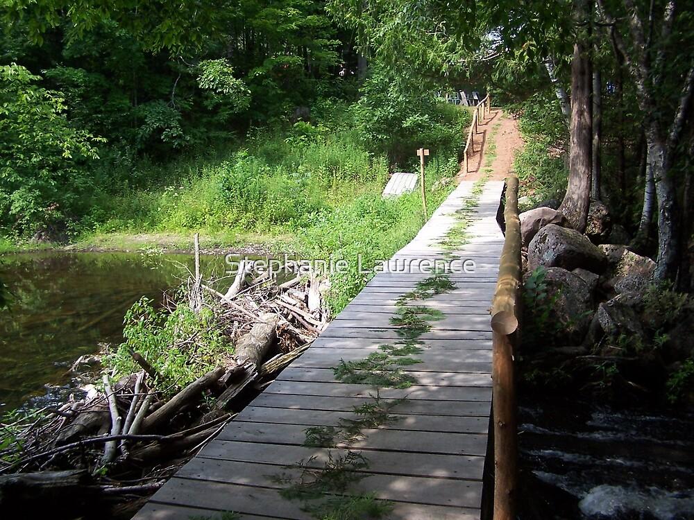 Cedar Paths by Stephanie Lawrence