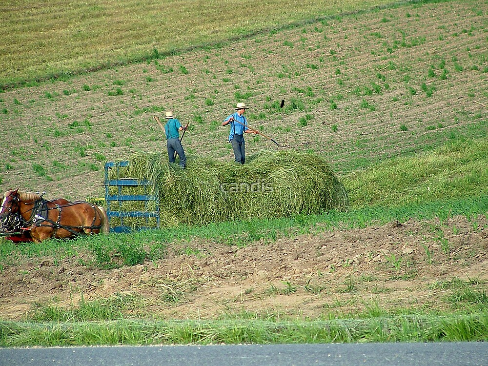 amish hay day by candis