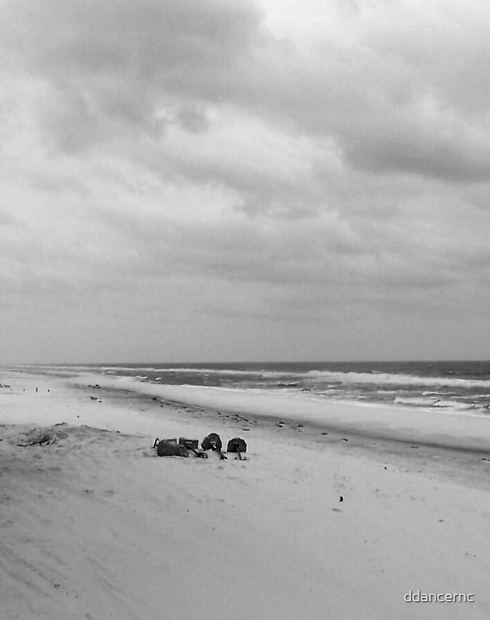 Beach in Black & White by ddancernc