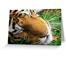 Bengal Majesty Greeting Card