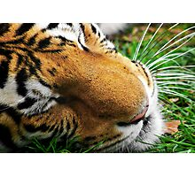 Bengal Majesty Photographic Print