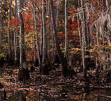 Hidden Swamp by photosan
