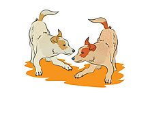 Two heeler pups playing tag Photographic Print