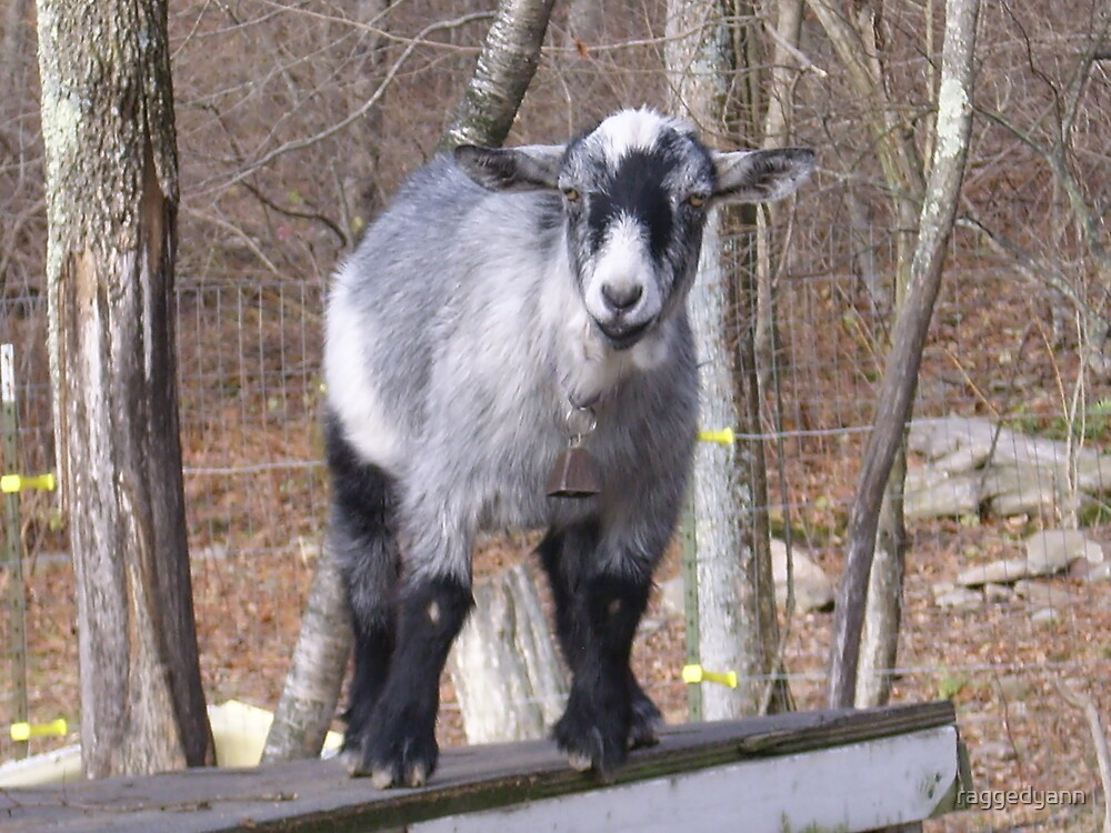 goat on the roof by raggedyann