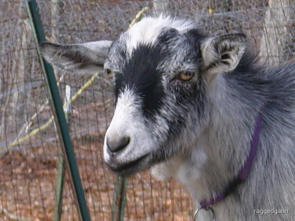 Pretty Goat by raggedyann