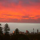 Independence Day .. Sydney Style by Michael Matthews