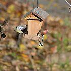 Birds! by Laura Puglia