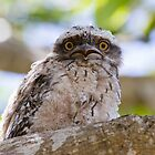 Do You Mean I Have To Leave The Nest? by byronbackyard