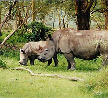 endangered white rhino baby and mother - Nakuru by nicolette
