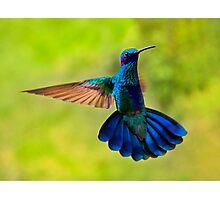Hummingbird Splendour Photographic Print
