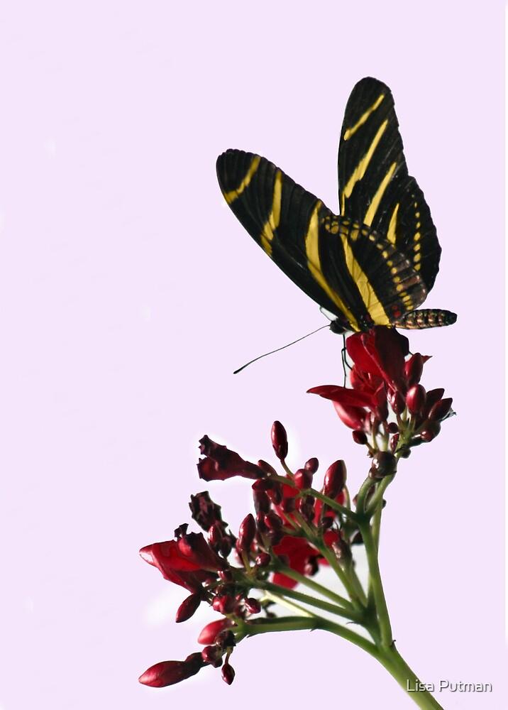 Zebra Beauty II by Lisa G. Putman