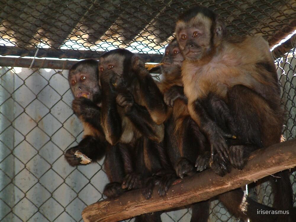 Capuchin family by iriserasmus