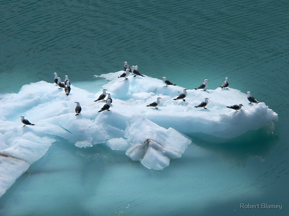 Ice Birds by Robert Blamey