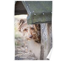 bad dog head jut out of kennel  Poster