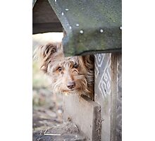 bad dog head jut out of kennel  Photographic Print