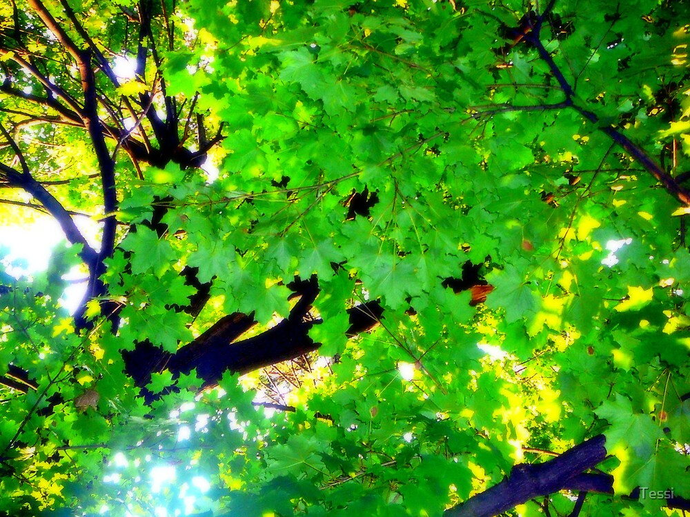 illuminated green leaves by Tessi
