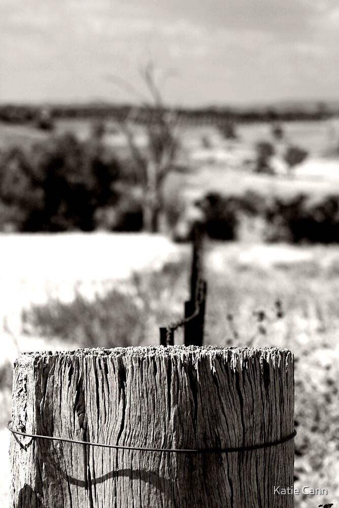 Stump by Katie Cann