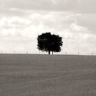 One Tree Hill by Katie Sumner-Cann
