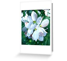 Apple Blossom 3 Greeting Card
