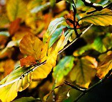 Autumn leaves by Matthew Thompson
