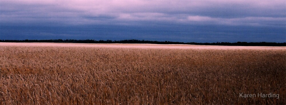 Canadian Wheat Field by Karen Harding