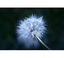 Magical Wish Photographic Print