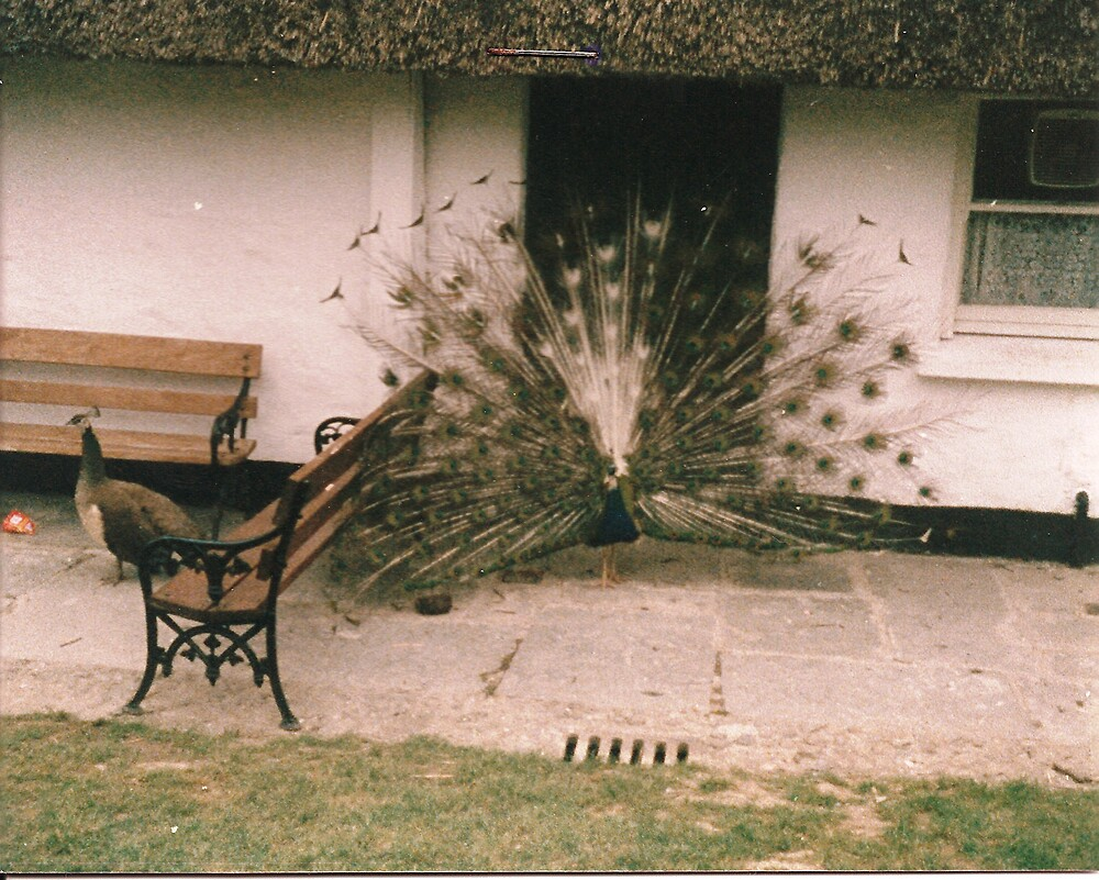 Feathers by Patrick Ronan