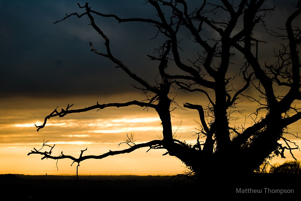 Sunset through tree by Matthew Thompson