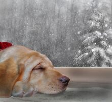 Dreamin' of a White Christmas 2 by Lori Deiter