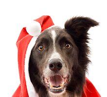 Santa Collie by Kate MacRae