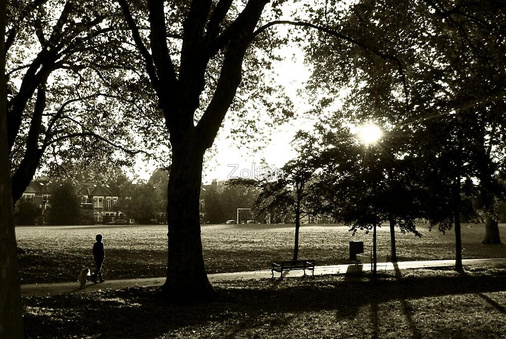 Putney Park  by Zoltan