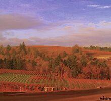 vineyard Splendor by maggiebarra