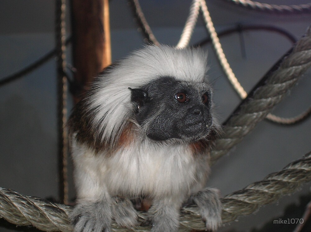 Monkey ready for this glamor shot by mike1070