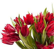 Water sprinkled cut red tulips bouquet  by Arletta Cwalina