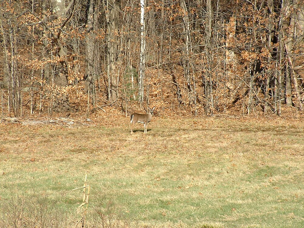 Deer2 by Brian Burdick