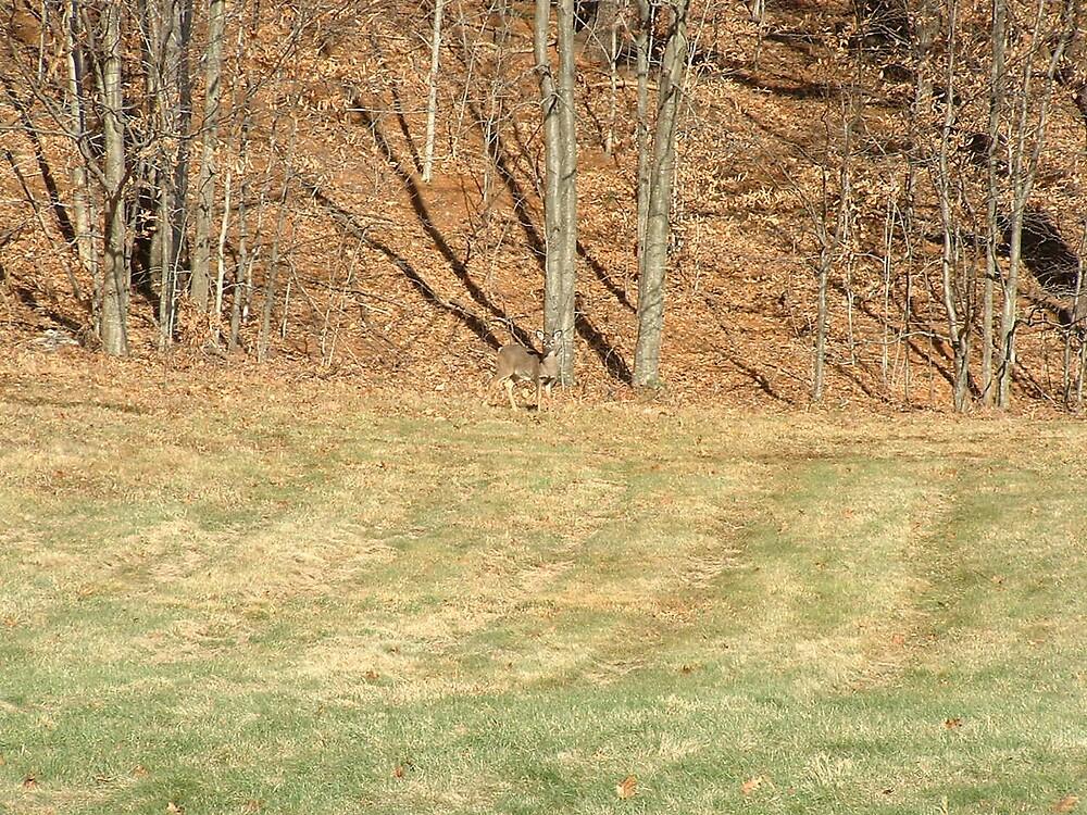 Deer5 by Brian Burdick