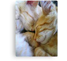 Snuggle Kittens Canvas Print