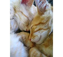 Snuggle Kittens Photographic Print