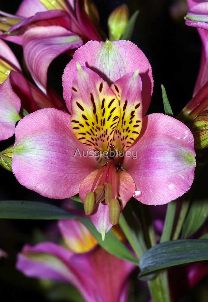 Pretty Flower. by Aussiebluey