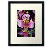 Pretty Flower. Framed Print