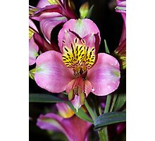 Pretty Flower. Photographic Print