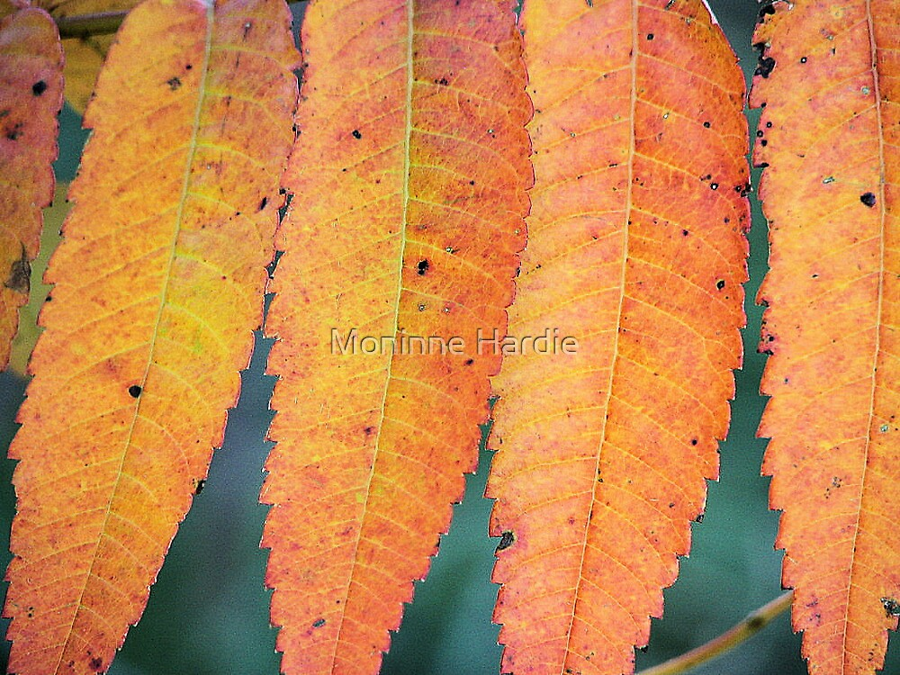 Fall Sumac by Moninne Hardie