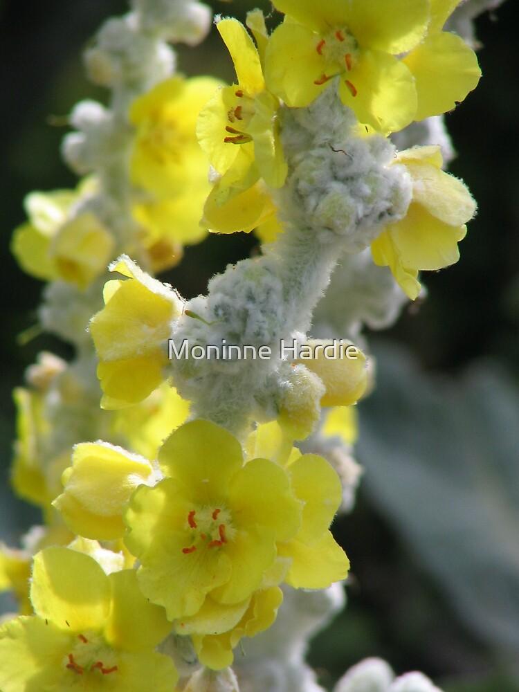 FuzzyYellow Flower by Moninne Hardie