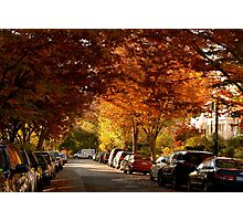 foliage in the city Photographic Print