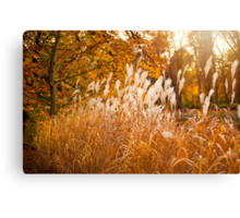 Miscanthus ornamental grass growing in park  Canvas Print