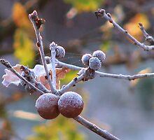 Sunrise (3) 24-11-07 by Sharon Perrett