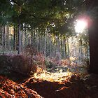 SunBeam by forestphotos