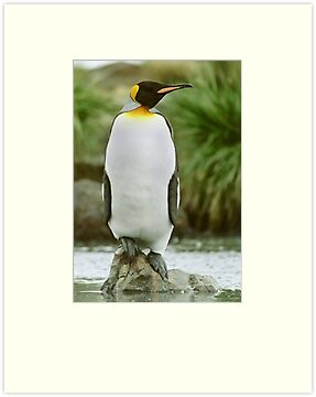 The Penguin King by Steve Bulford