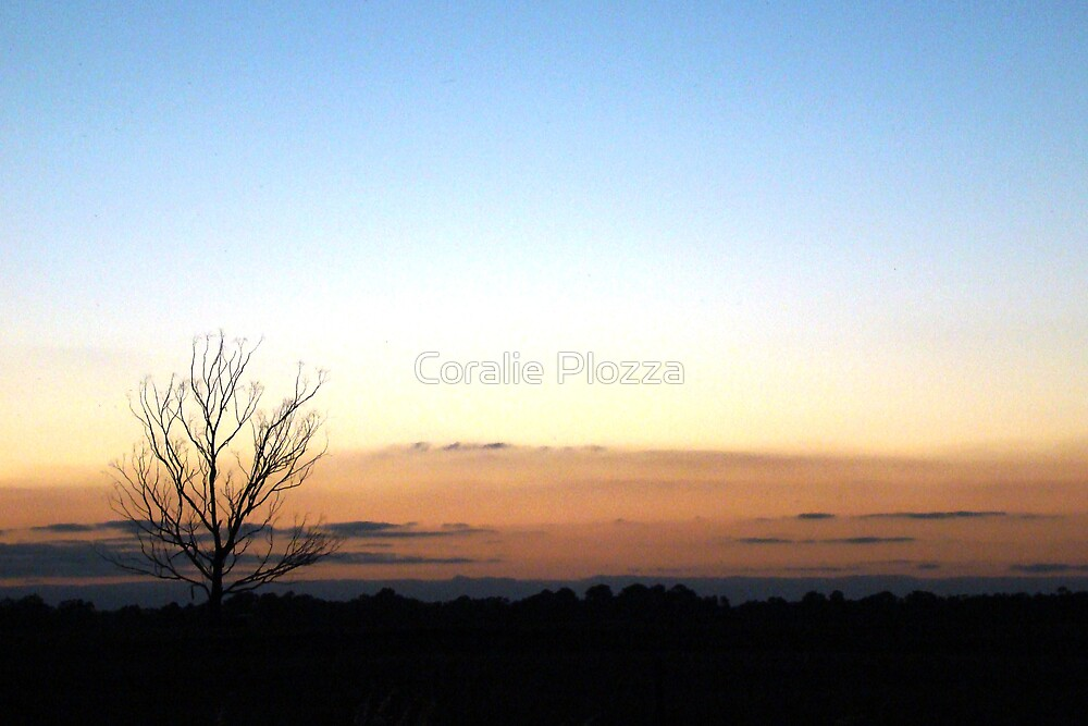 Sunset Tree Study by Coralie Plozza
