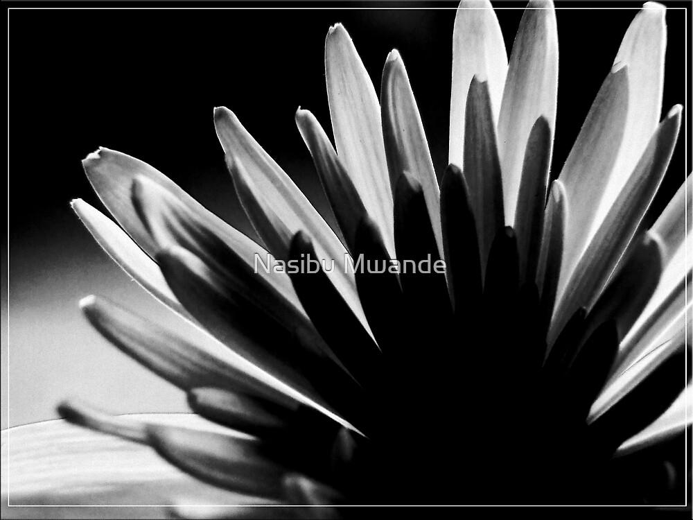 Black and White by Nasibu Mwande